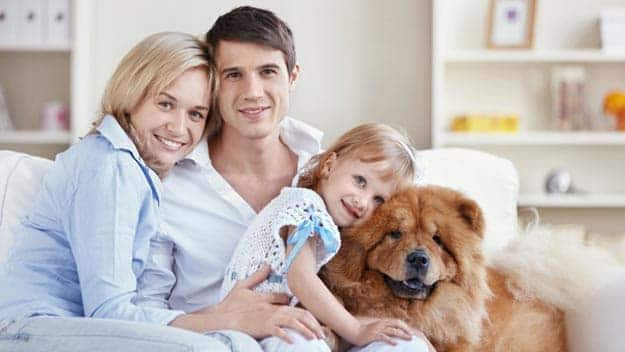Wills & Trusts dog-young-family Direct Wills Edgware